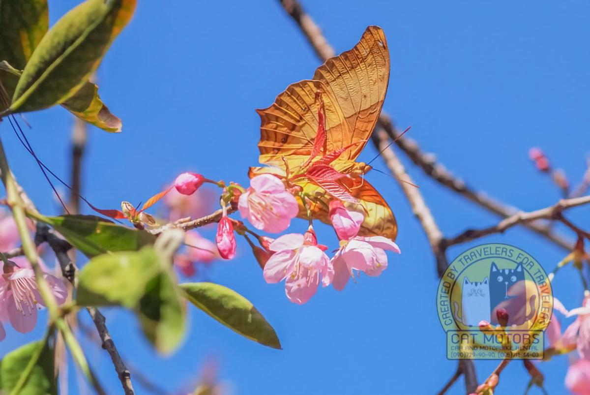 Beautiful Butterfly Doi Ang Khang