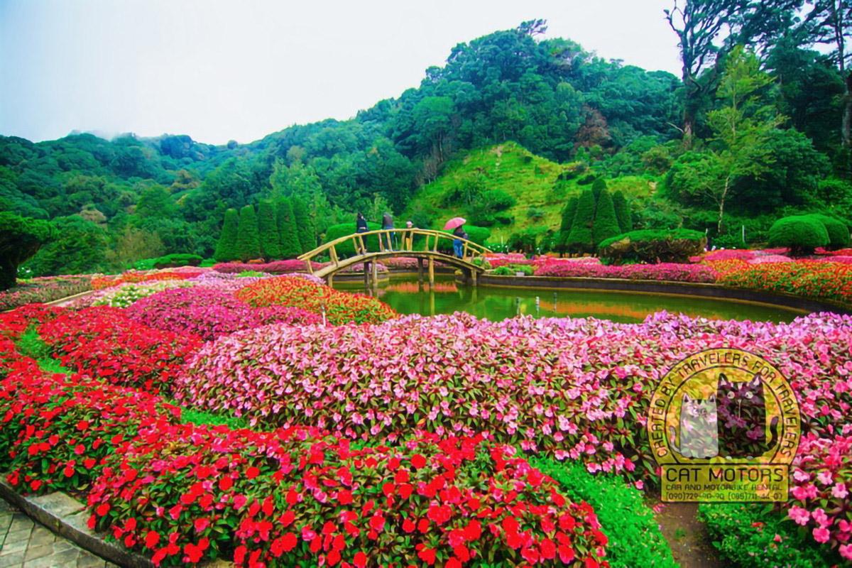 Doi Inthanon Summit Flower