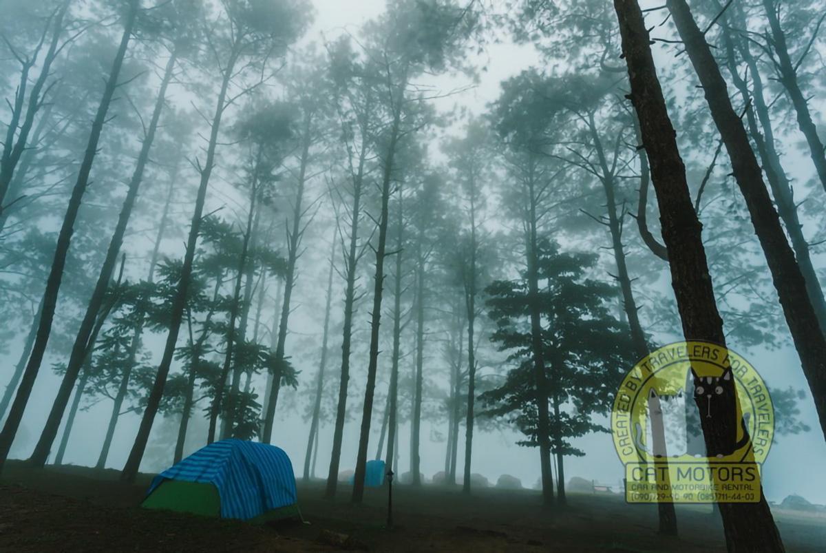 Fog And Pines At Doi Ang Khang