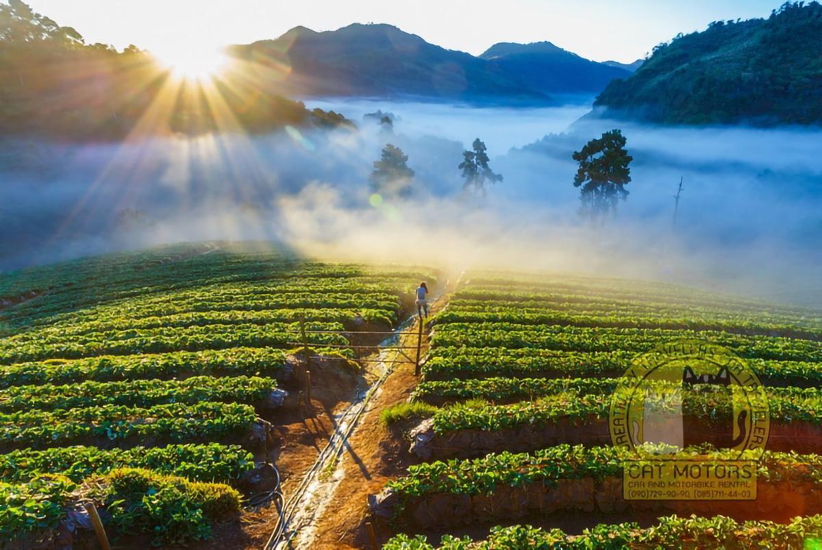 Morning View Of Doi Ang Khang