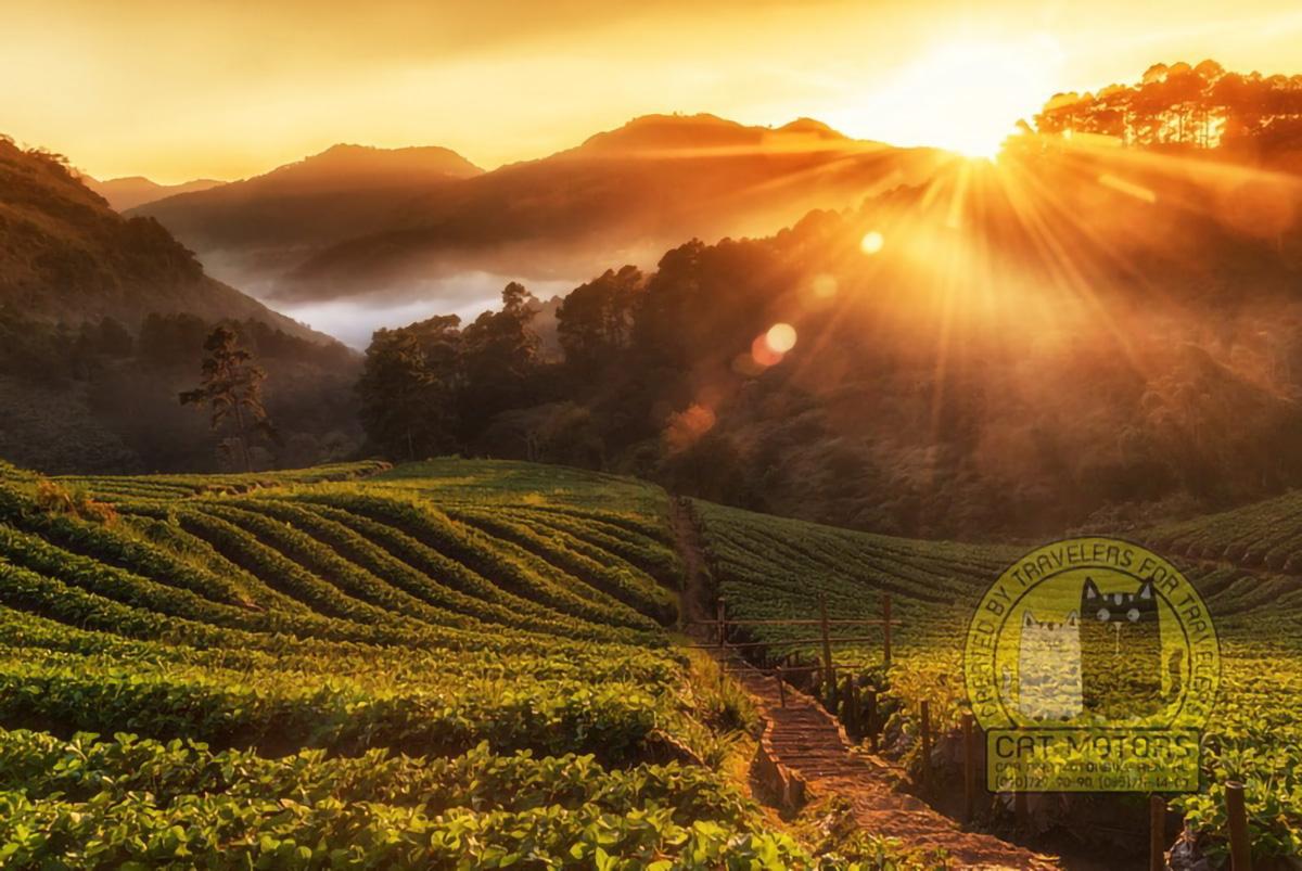 Misty Morning Sunrise Doi Ang Khang