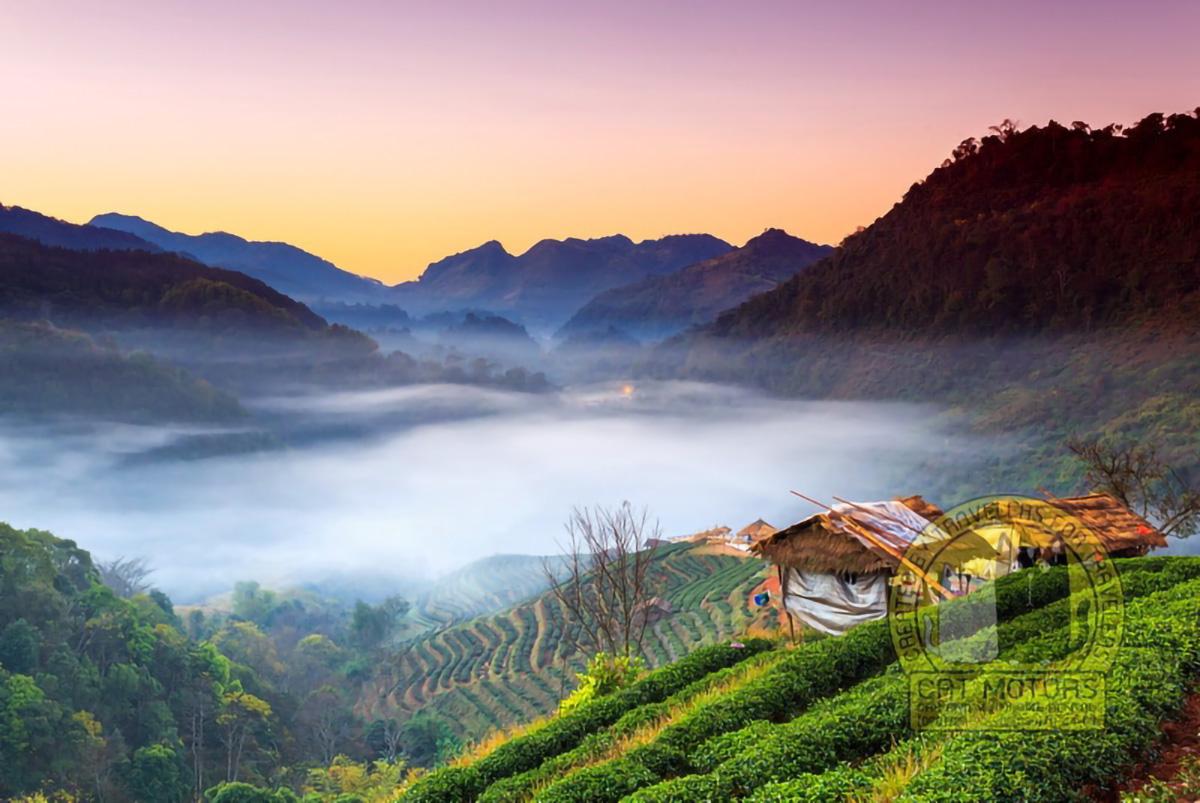 Sunrise And Foggy Mountain View Tea Plantation Doi Ang Khang