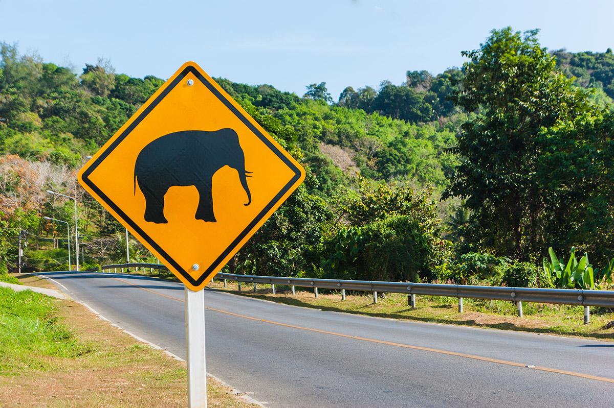 Beware wild elephant in Thailand, road sign